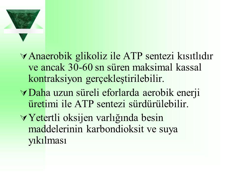 Anaerobik glikoliz ile ATP sentezi kısıtlıdır ve ancak 30-60 sn süren maksimal kassal kontraksiyon gerçekleştirilebilir.