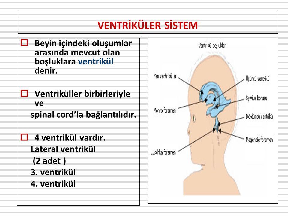 VENTRİKÜLER SİSTEM Beyin içindeki oluşumlar arasında mevcut olan boşluklara ventrikül denir. Ventriküller birbirleriyle ve.