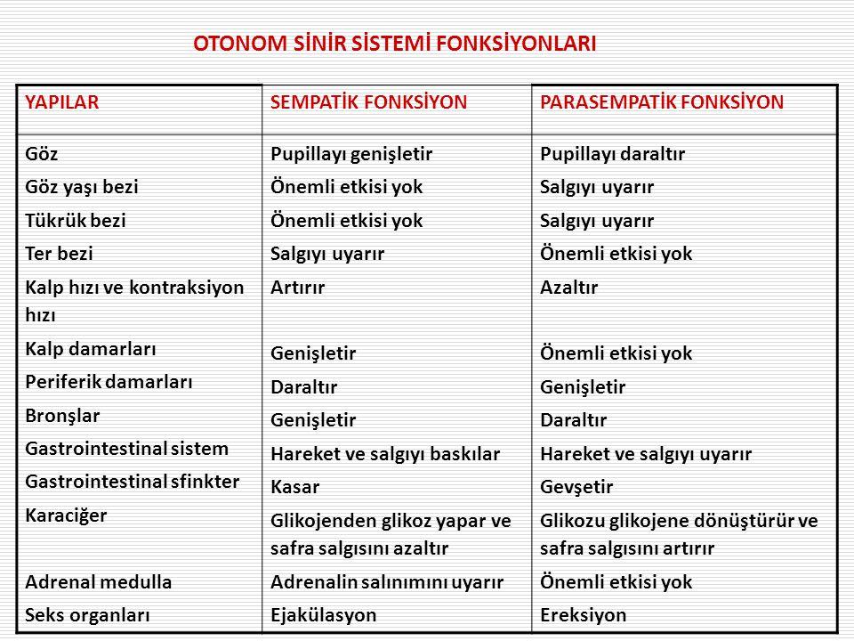 OTONOM SİNİR SİSTEMİ FONKSİYONLARI