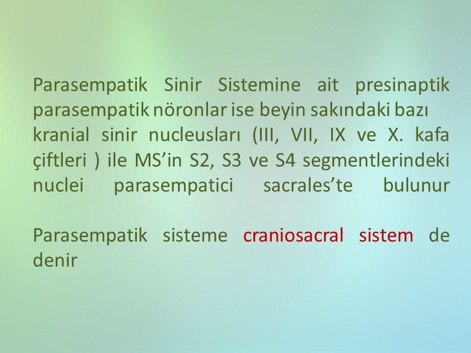 Parasempatik Sinir Sistemine ait presinaptik parasempatik nöronlar ise beyin sakındaki bazı