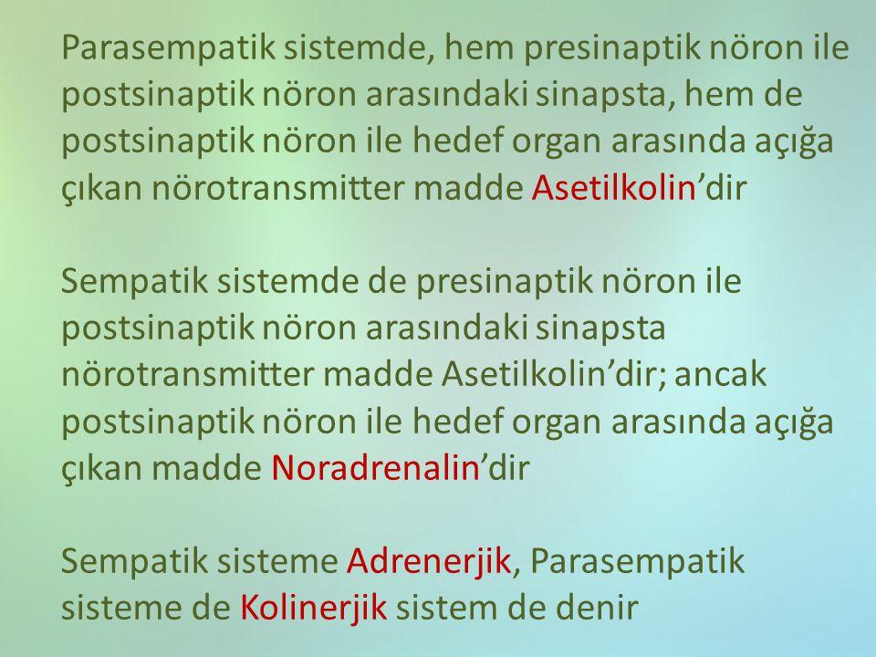 Parasempatik sistemde, hem presinaptik nöron ile postsinaptik nöron arasındaki sinapsta, hem de postsinaptik nöron ile hedef organ arasında açığa çıkan nörotransmitter madde Asetilkolin'dir