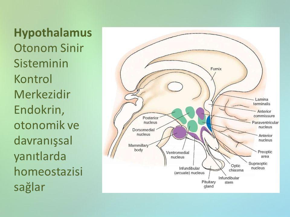 Hypothalamus Otonom Sinir Sisteminin Kontrol Merkezidir