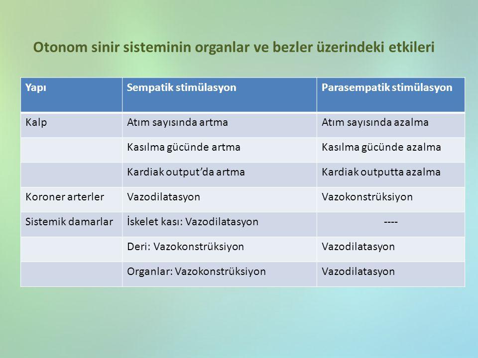 Otonom sinir sisteminin organlar ve bezler üzerindeki etkileri
