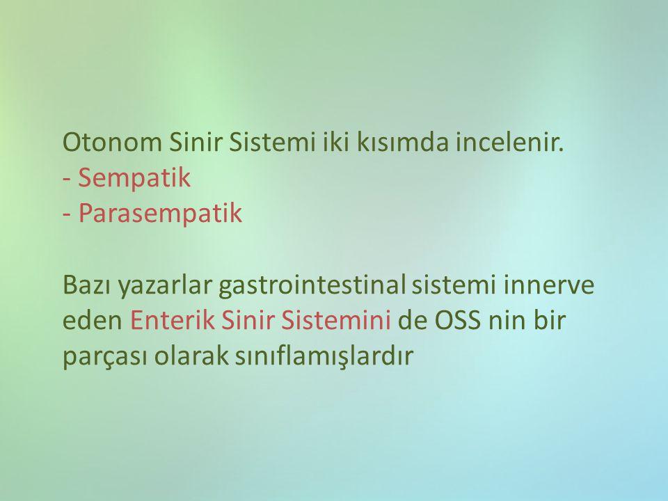 Otonom Sinir Sistemi iki kısımda incelenir
