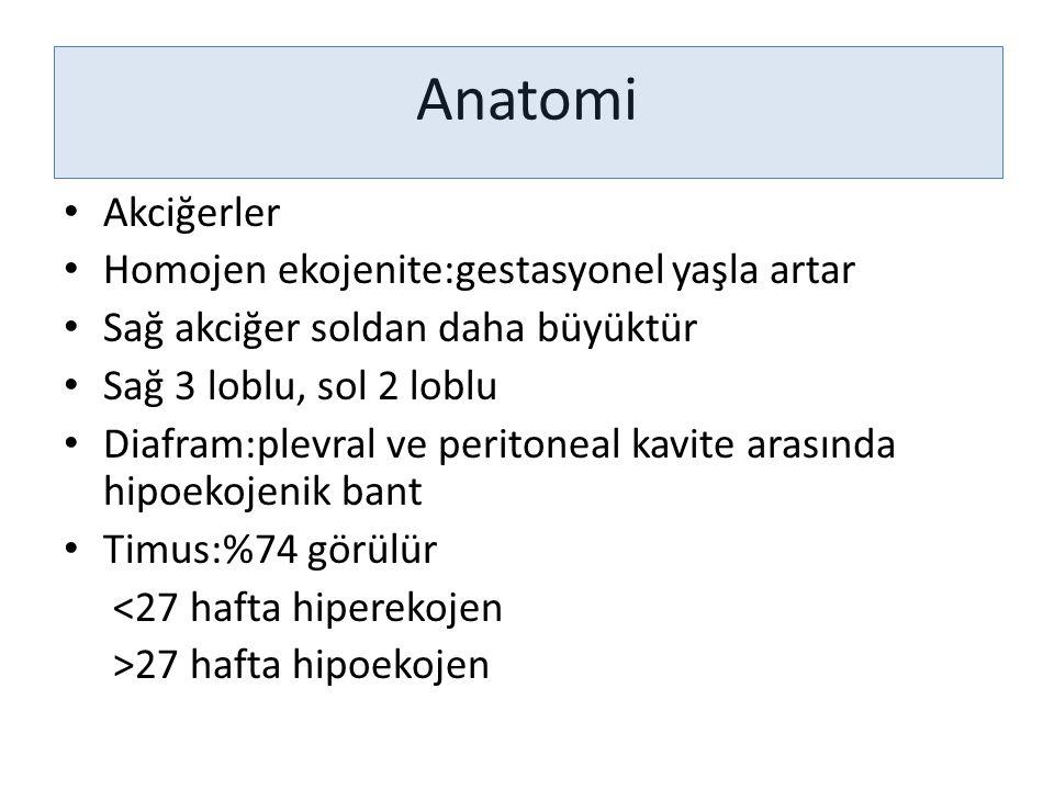 Anatomi Akciğerler Homojen ekojenite:gestasyonel yaşla artar