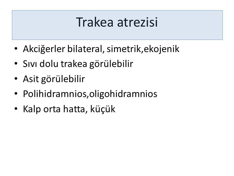 Trakea atrezisi Akciğerler bilateral, simetrik,ekojenik