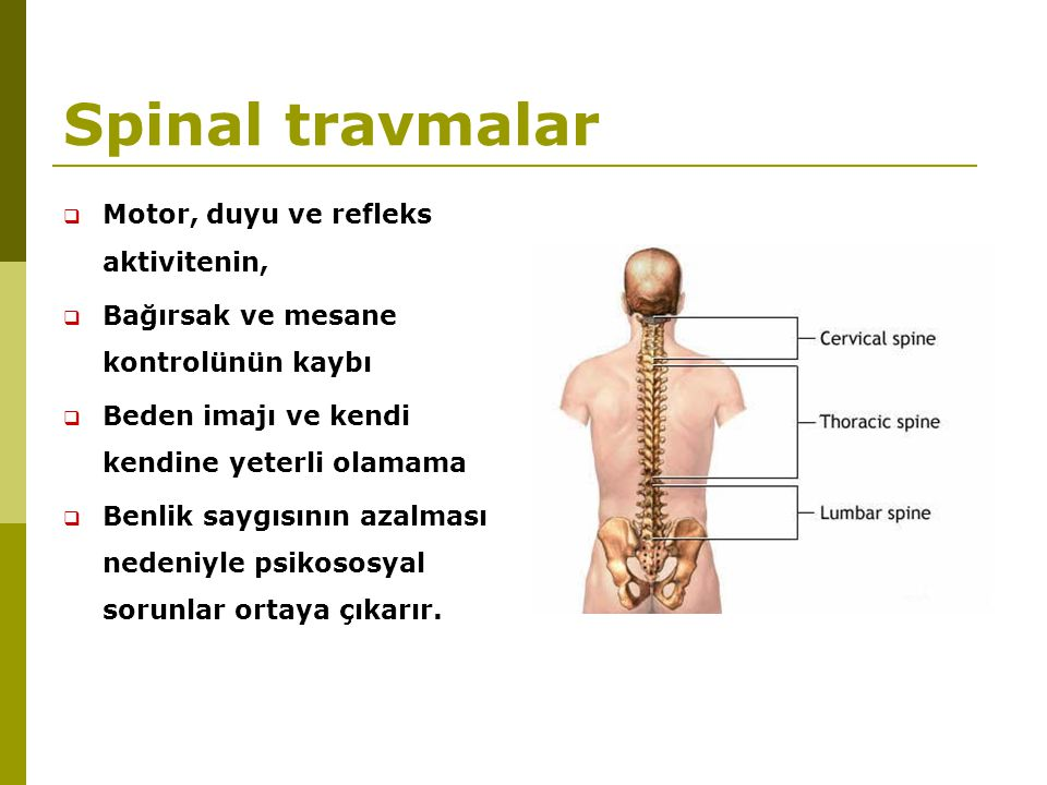 Spinal travmalar Motor, duyu ve refleks aktivitenin,