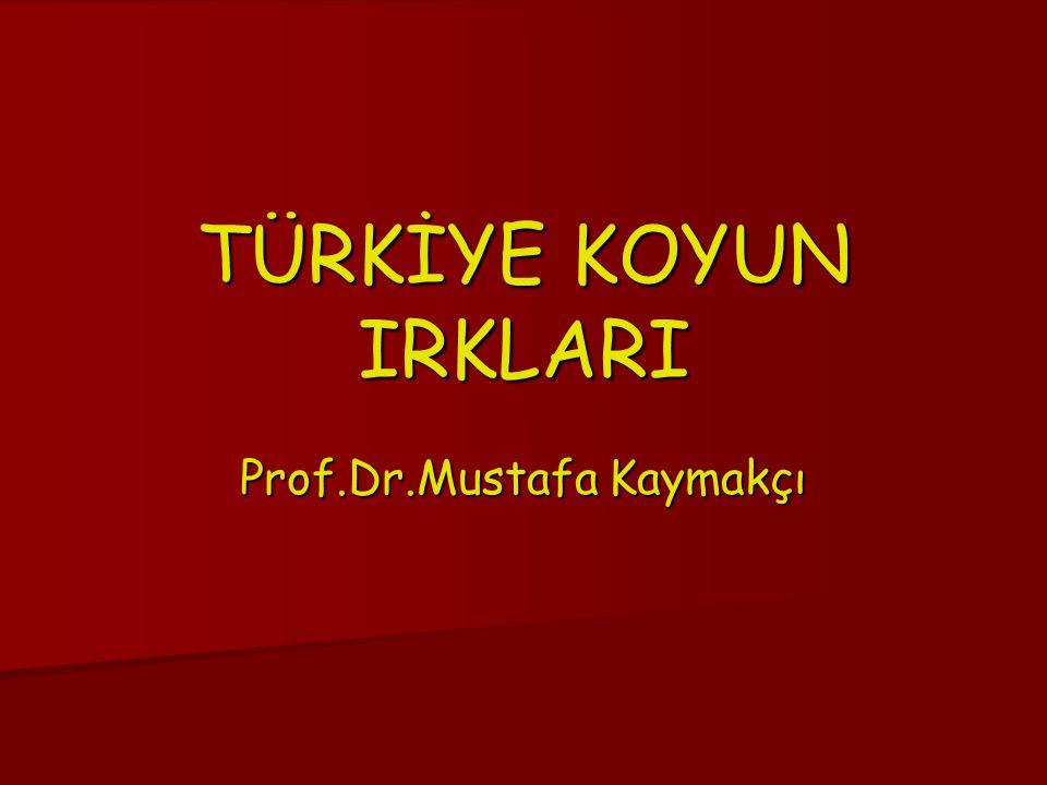 Prof.Dr.Mustafa Kaymakçı