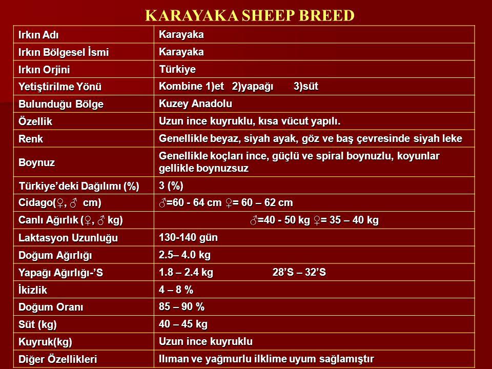KARAYAKA SHEEP BREED Irkın Adı Karayaka Irkın Bölgesel İsmi