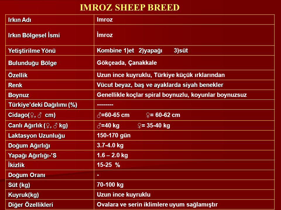 IMROZ SHEEP BREED Irkın Adı Imroz Irkın Bölgesel İsmi İmroz