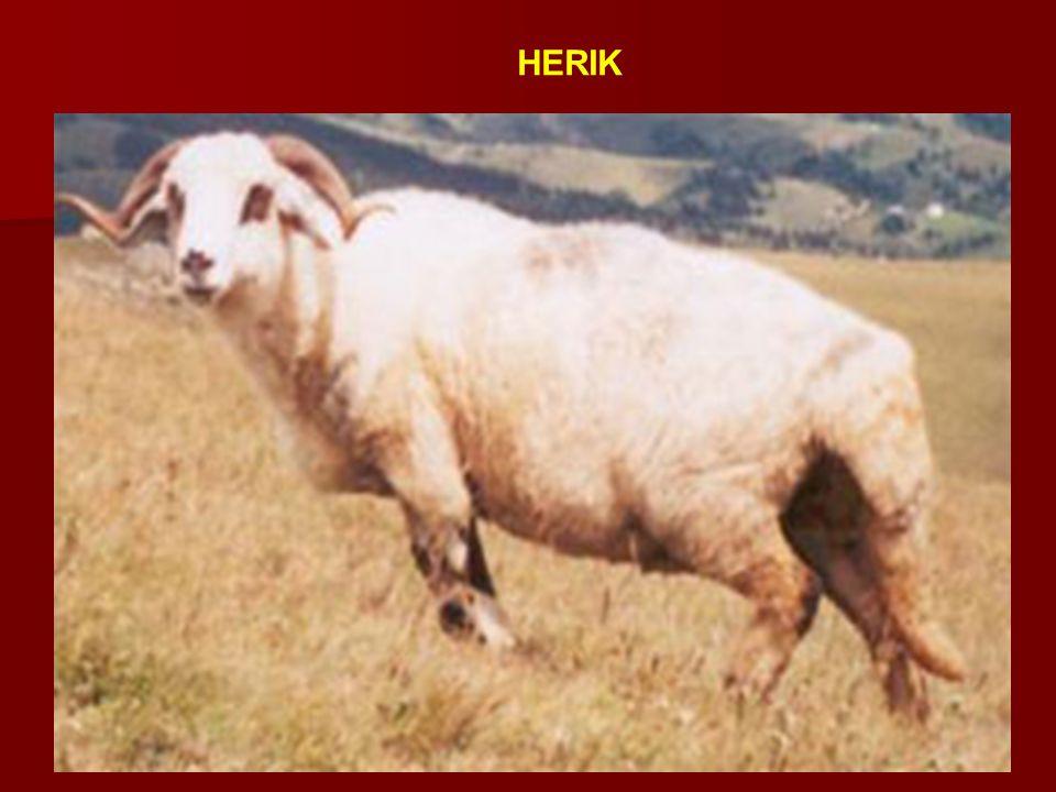 HERIK