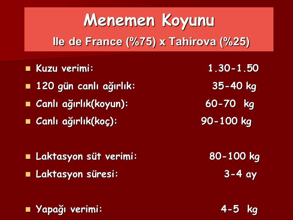 Menemen Koyunu Ile de France (%75) x Tahirova (%25)