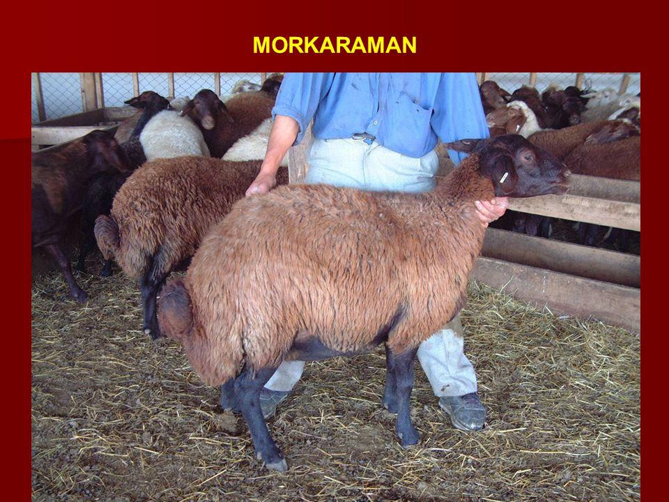 MORKARAMAN