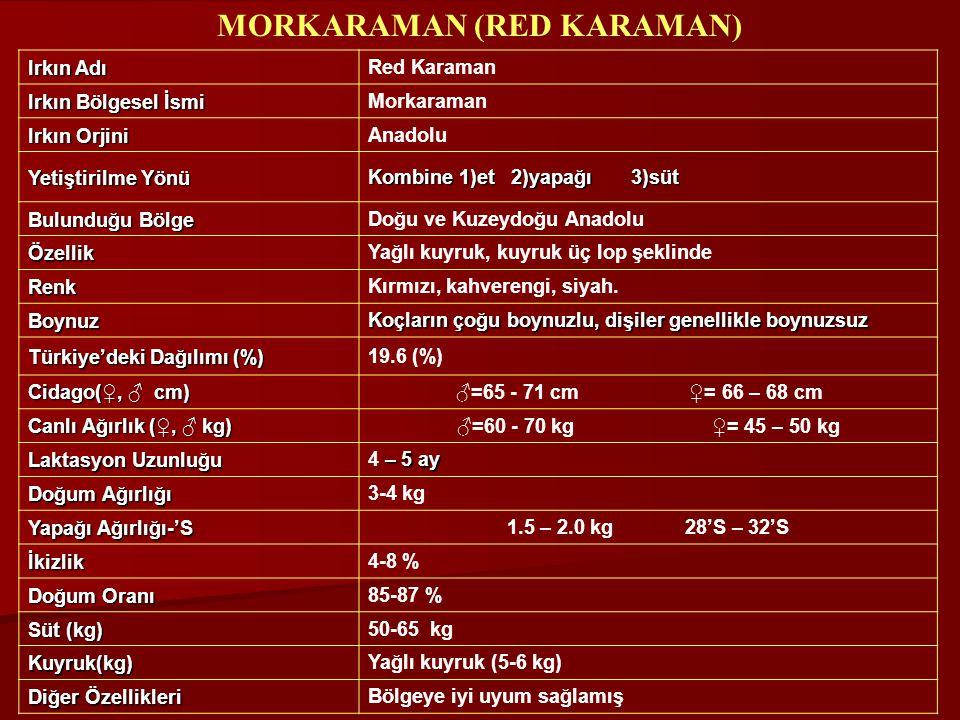 MORKARAMAN (RED KARAMAN)