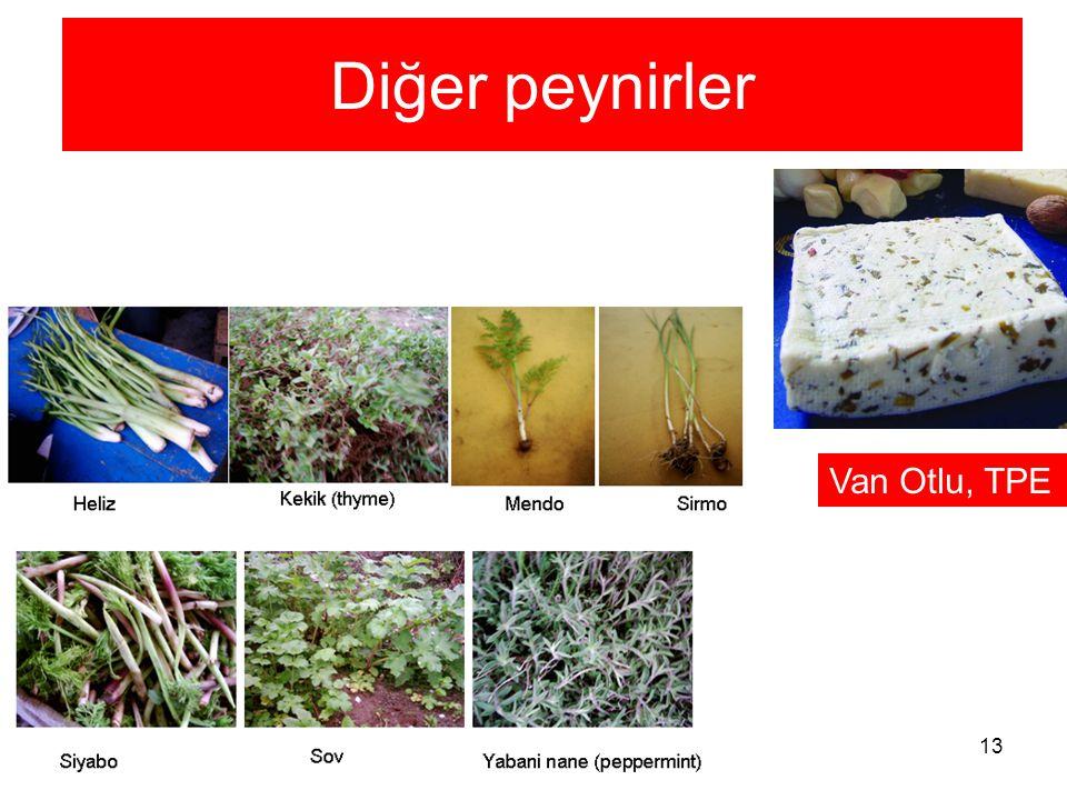 Diğer peynirler Van Otlu, TPE