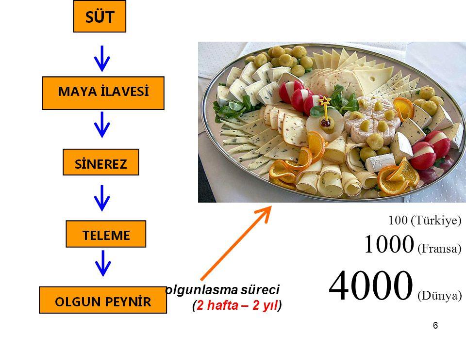 4000 (Dünya) 1000 (Fransa) 100 (Türkiye) olgunlasma süreci