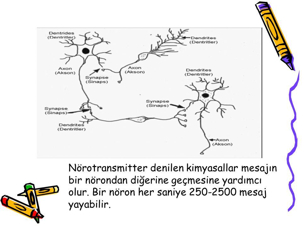 Nörotransmitter denilen kimyasallar mesajın bir nörondan diğerine geçmesine yardımcı olur.