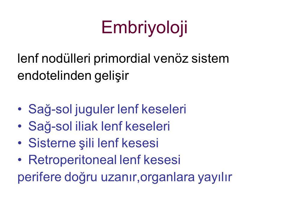 Embriyoloji lenf nodülleri primordial venöz sistem