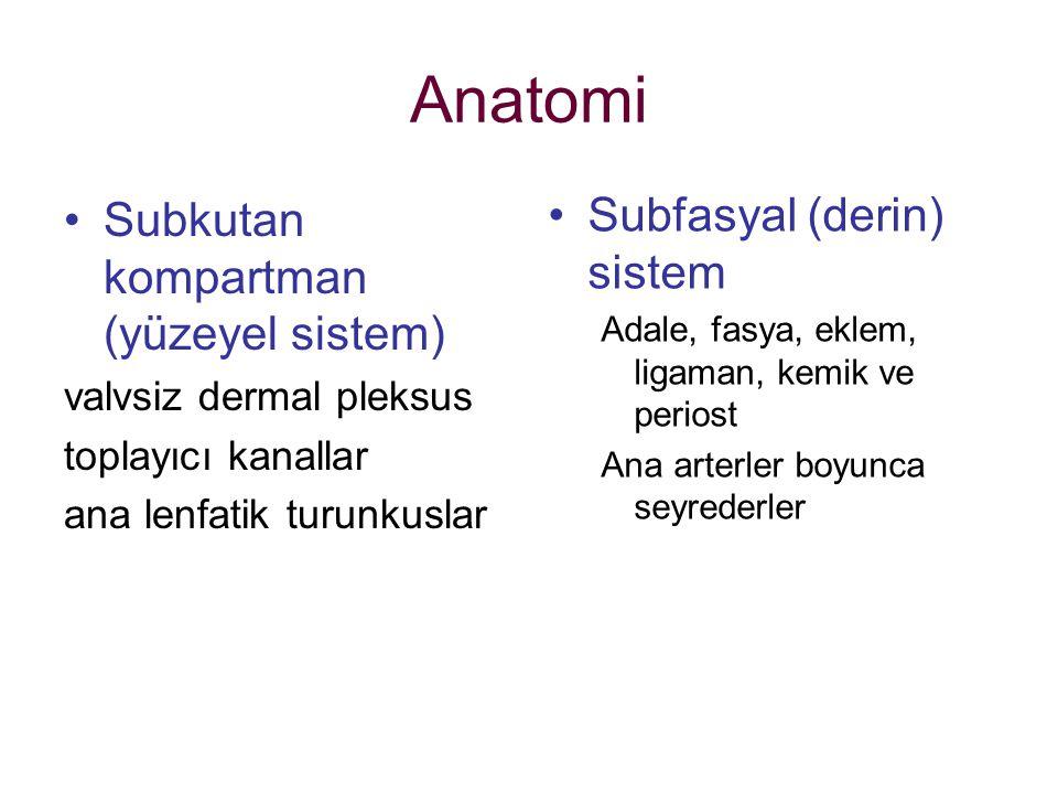 Anatomi Subfasyal (derin) sistem Subkutan kompartman (yüzeyel sistem)