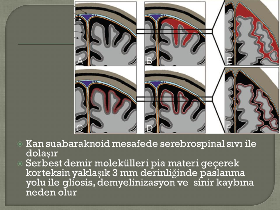 Kan suabaraknoid mesafede serebrospinal sıvı ile dolaşır