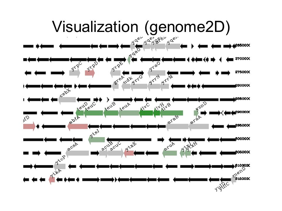 Visualization (genome2D)