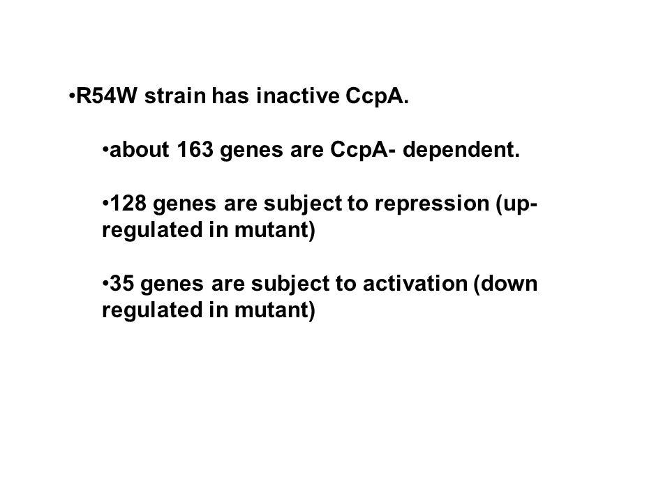 R54W strain has inactive CcpA.