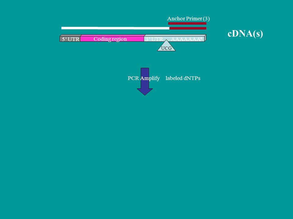 cDNA(s) Anchor Primer (3) 5' UTR Coding region 3' UTR AAAAAAAn