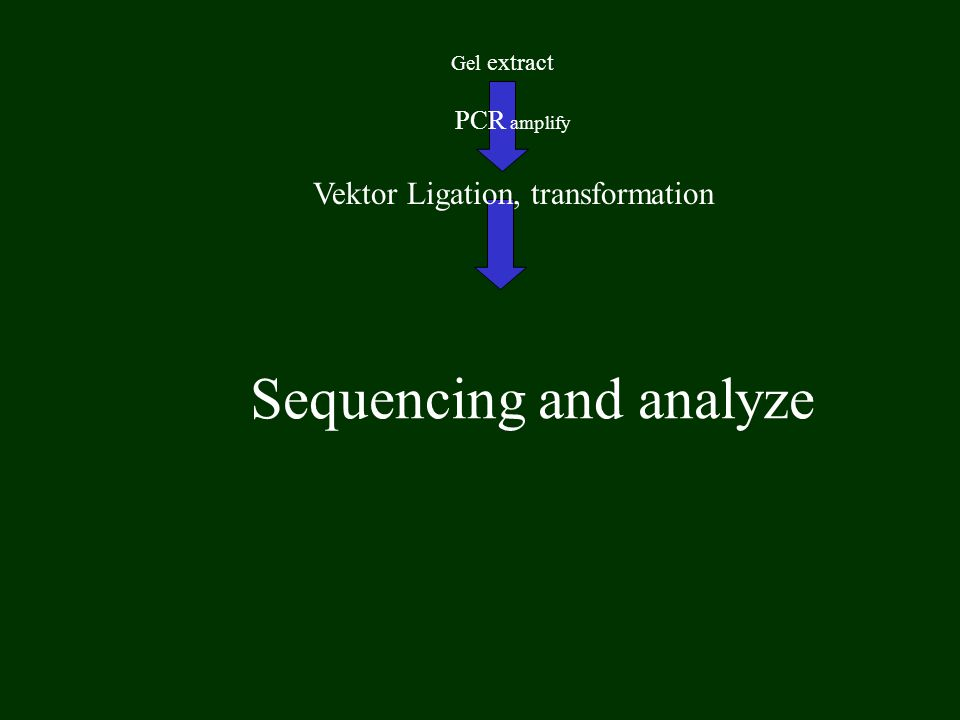 Sequencing and analyze