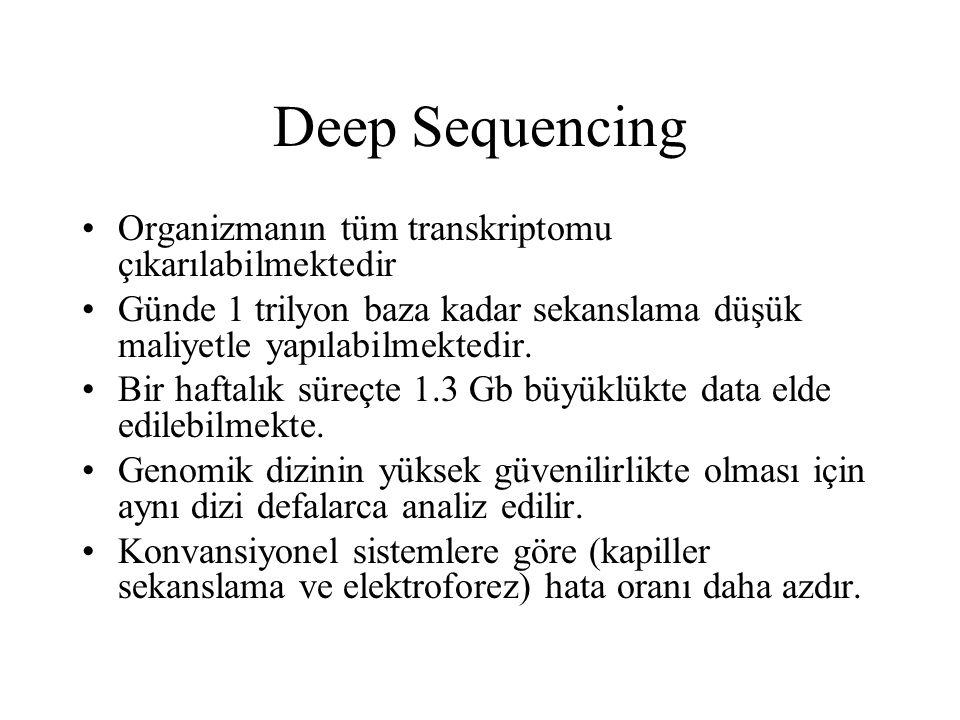Deep Sequencing Organizmanın tüm transkriptomu çıkarılabilmektedir