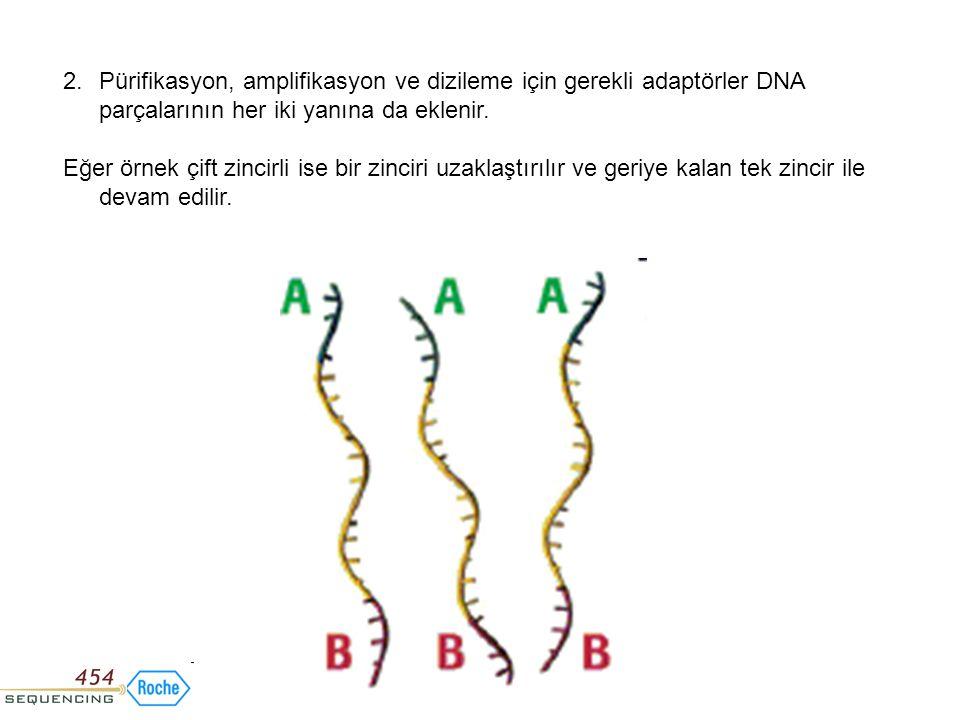 Pürifikasyon, amplifikasyon ve dizileme için gerekli adaptörler DNA parçalarının her iki yanına da eklenir.