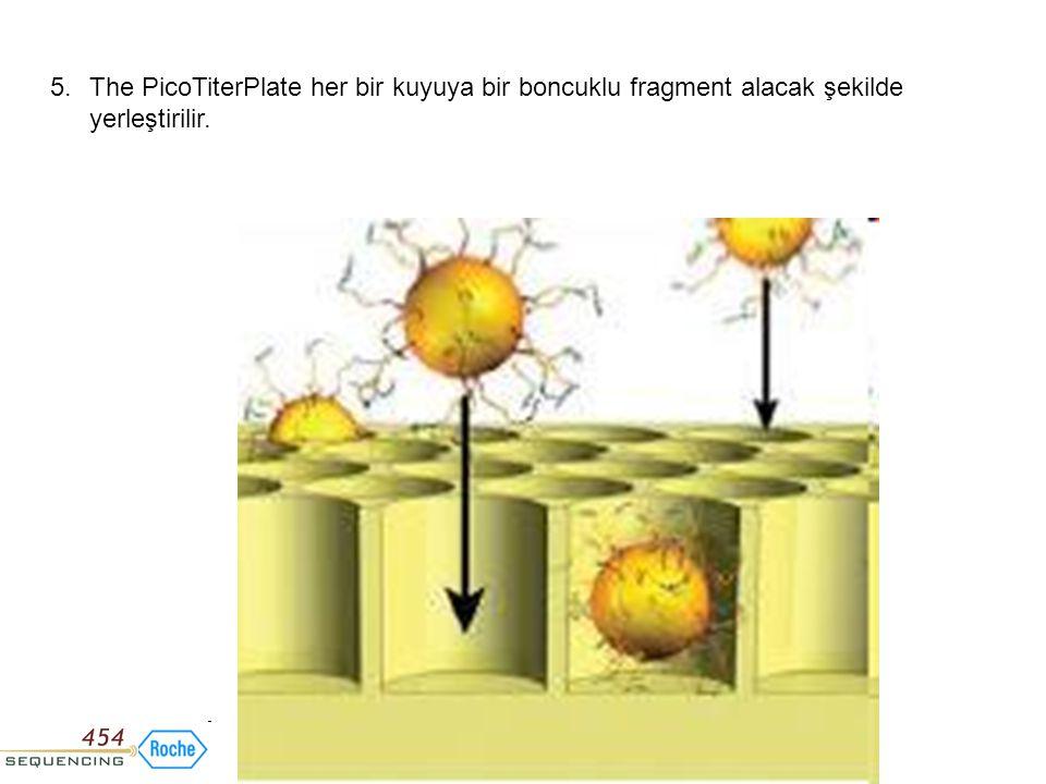 5. The PicoTiterPlate her bir kuyuya bir boncuklu fragment alacak şekilde yerleştirilir.
