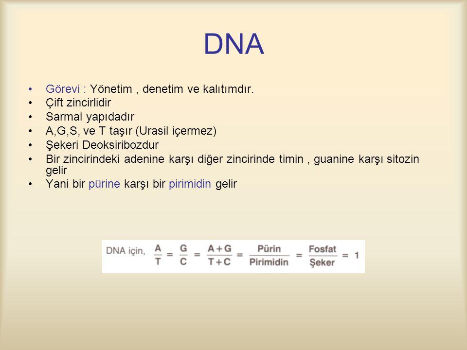 DNA Görevi : Yönetim , denetim ve kalıtımdır. Çift zincirlidir