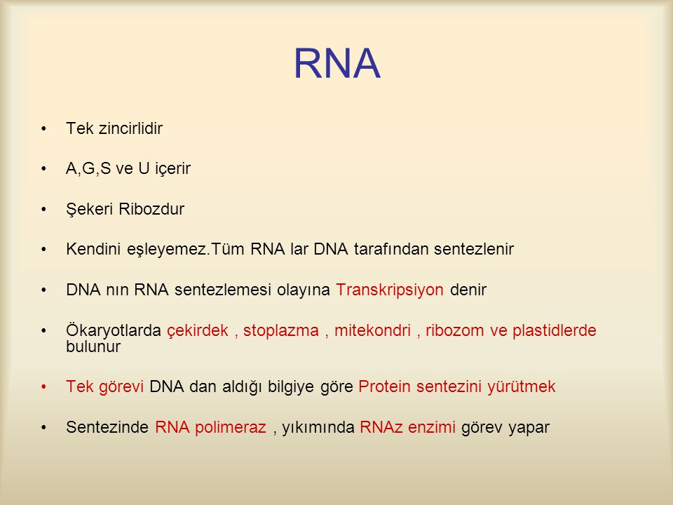 RNA Tek zincirlidir A,G,S ve U içerir Şekeri Ribozdur