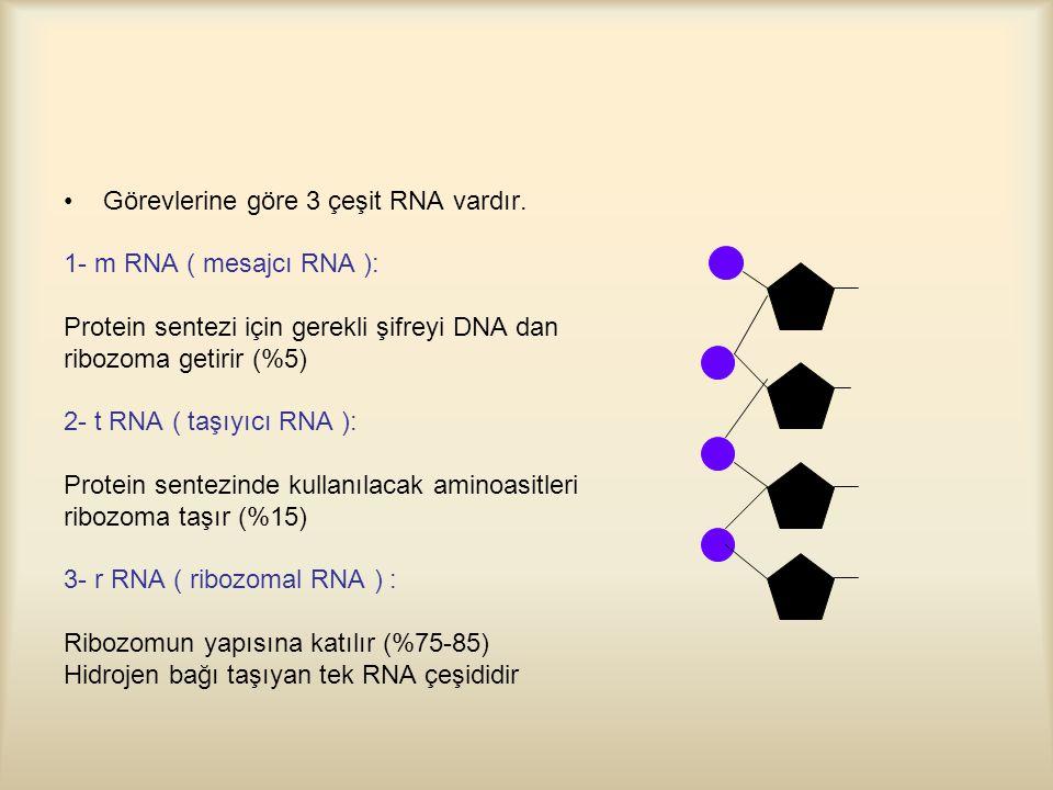 Görevlerine göre 3 çeşit RNA vardır.