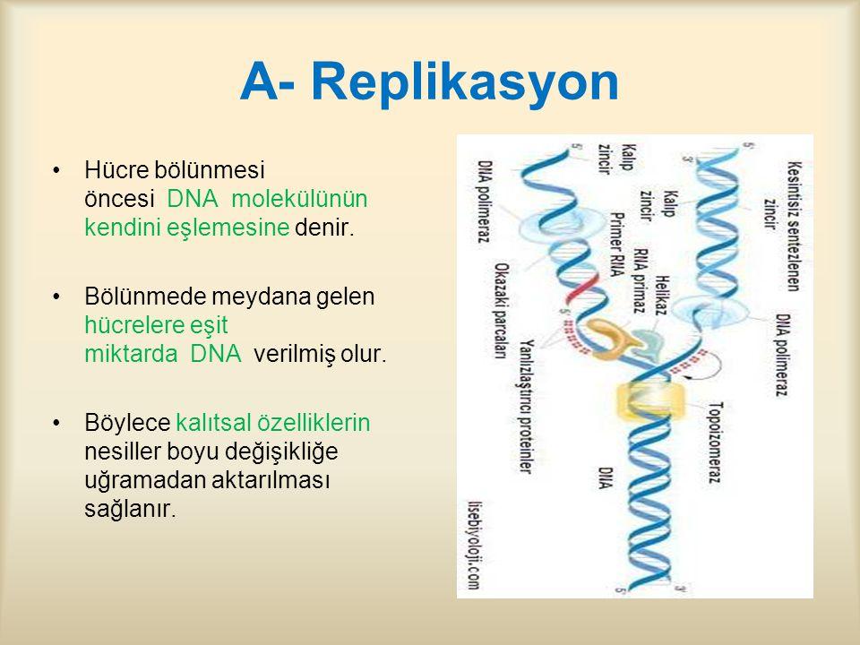 A- Replikasyon Hücre bölünmesi öncesi DNA molekülünün kendini eşlemesine denir.