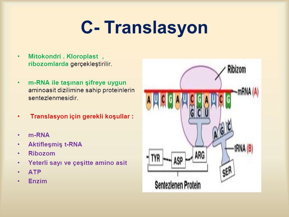 C- Translasyon Mitokondri . Kloroplast , ribozomlarda gerçekleştirilir.