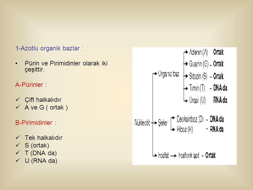 1-Azotlu organik bazlar :