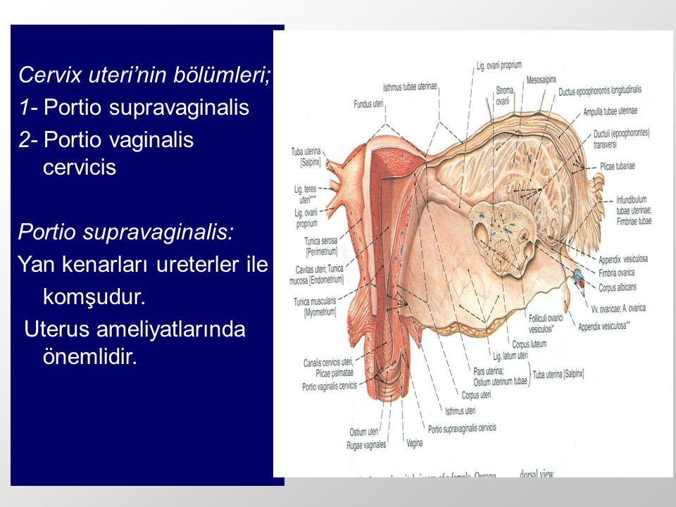 Cervix uteri'nin bölümleri;