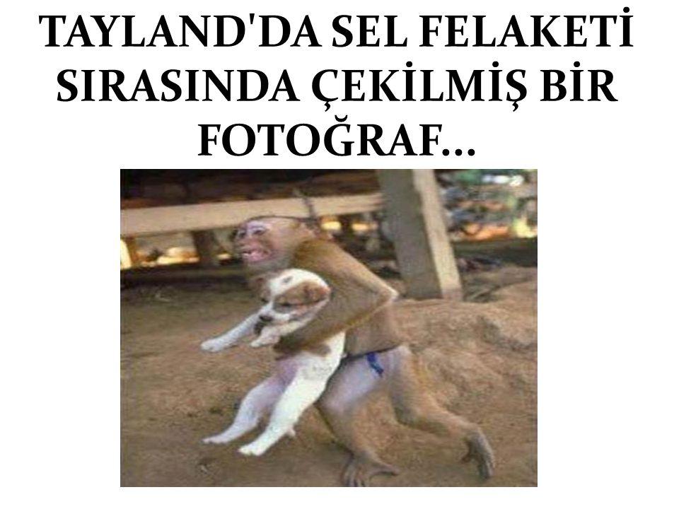 TAYLAND DA SEL FELAKETİ SIRASINDA ÇEKİLMİŞ BİR FOTOĞRAF...