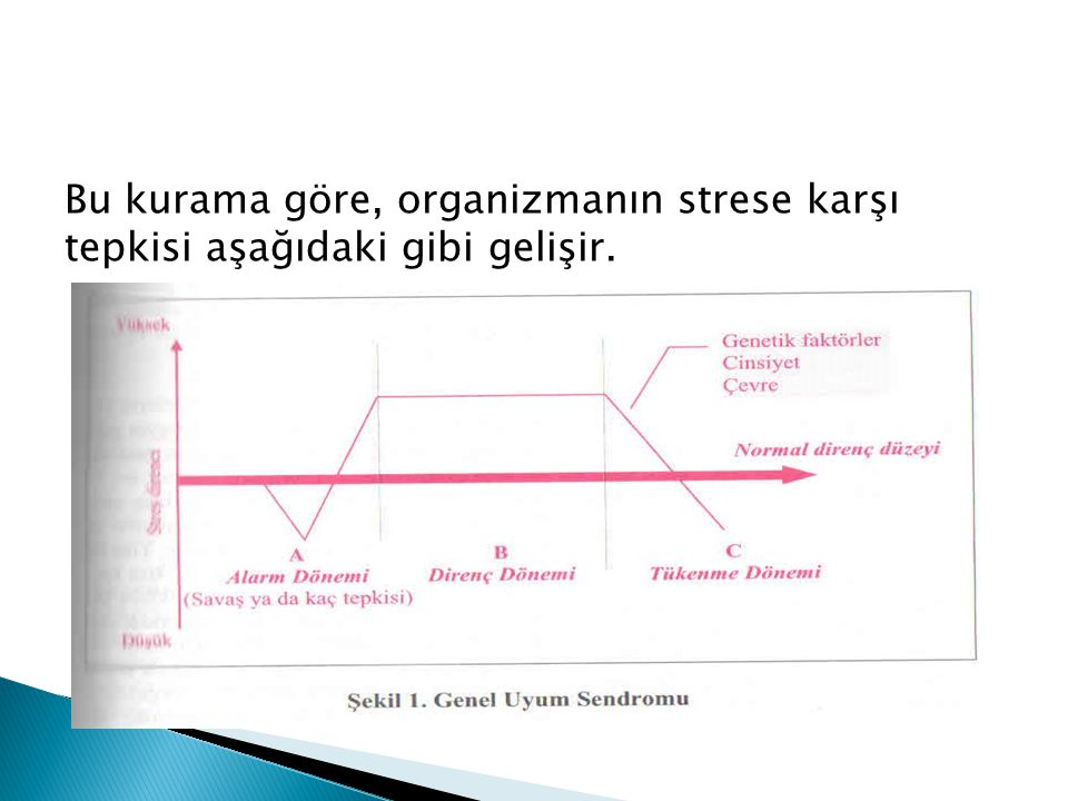 Bu kurama göre, organizmanın strese karşı tepkisi aşağıdaki gibi gelişir.