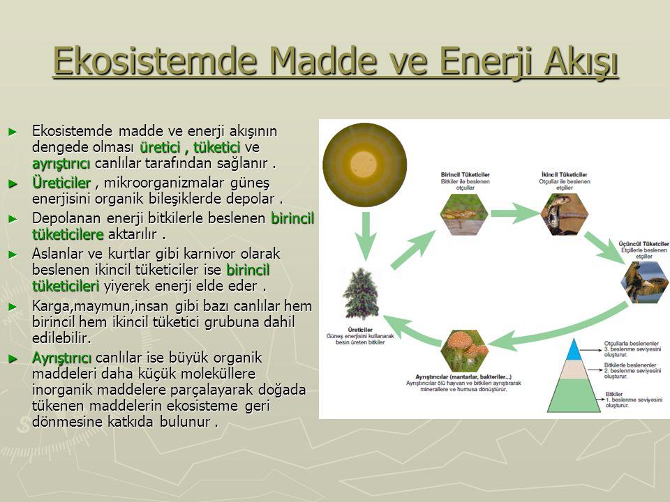 Ekosistemde Madde ve Enerji Akışı