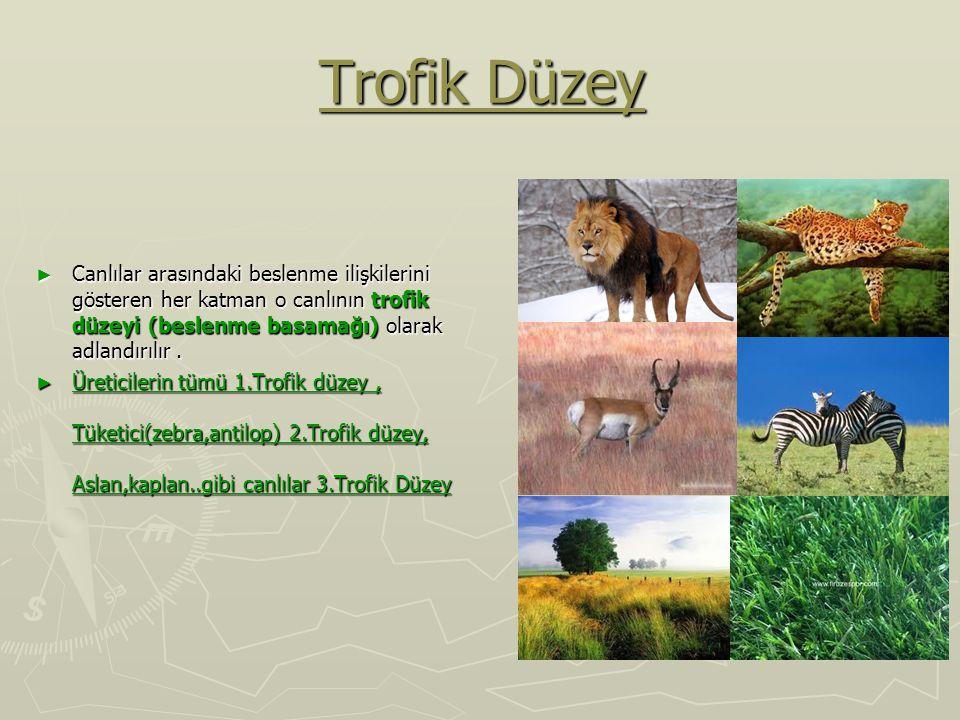 Trofik Düzey Canlılar arasındaki beslenme ilişkilerini gösteren her katman o canlının trofik düzeyi (beslenme basamağı) olarak adlandırılır .