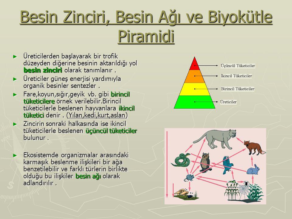 Besin Zinciri, Besin Ağı ve Biyokütle Piramidi