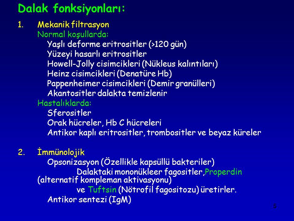 Dalak fonksiyonları: Mekanik filtrasyon Normal koşullarda: