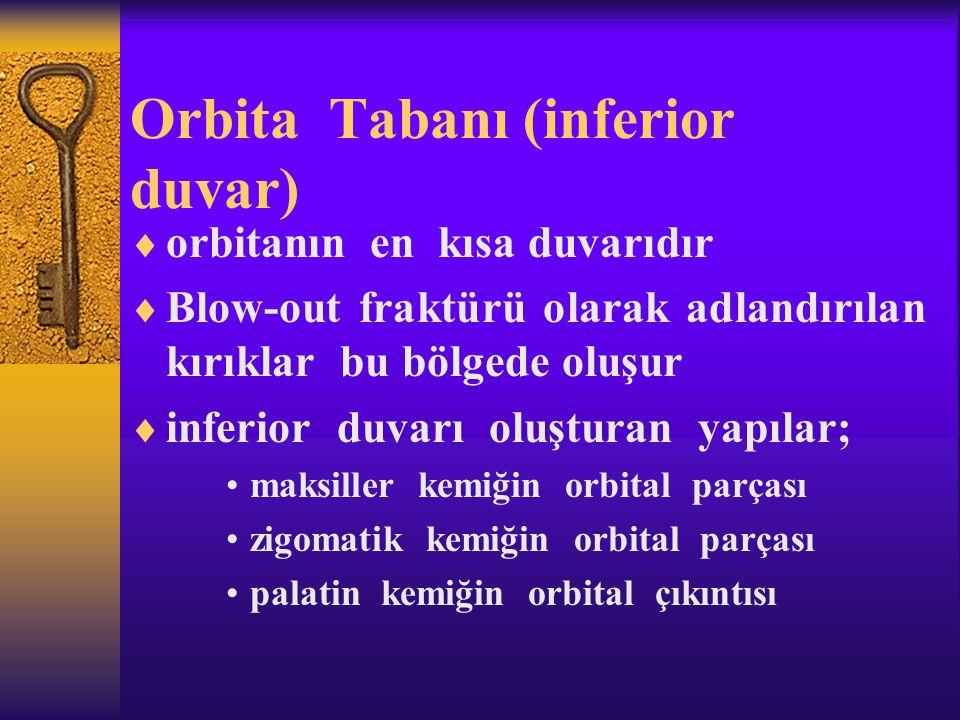 Orbita Tabanı (inferior duvar)