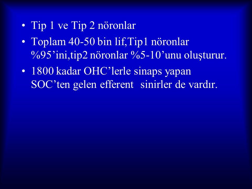 Tip 1 ve Tip 2 nöronlar Toplam 40-50 bin lif,Tip1 nöronlar %95'ini,tip2 nöronlar %5-10'unu oluşturur.