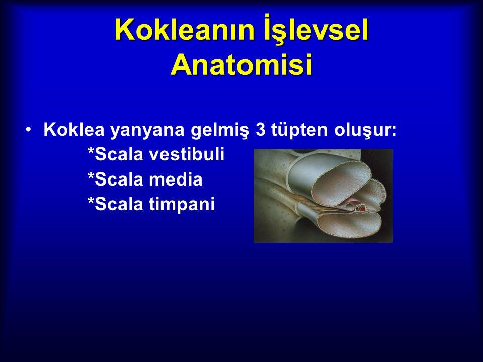 Kokleanın İşlevsel Anatomisi