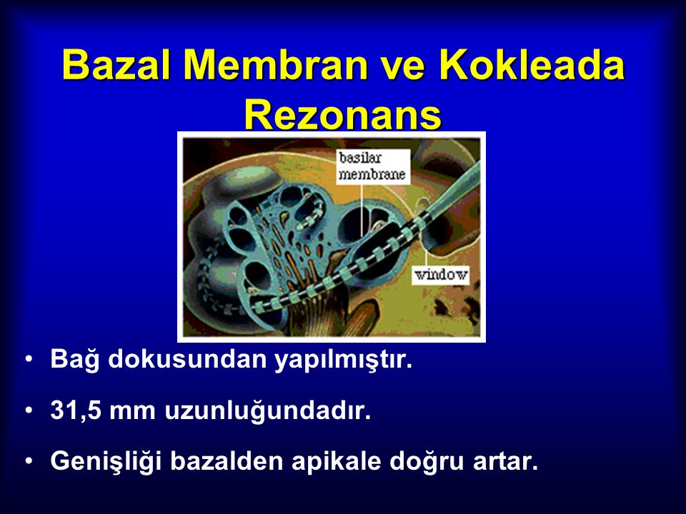 Bazal Membran ve Kokleada Rezonans