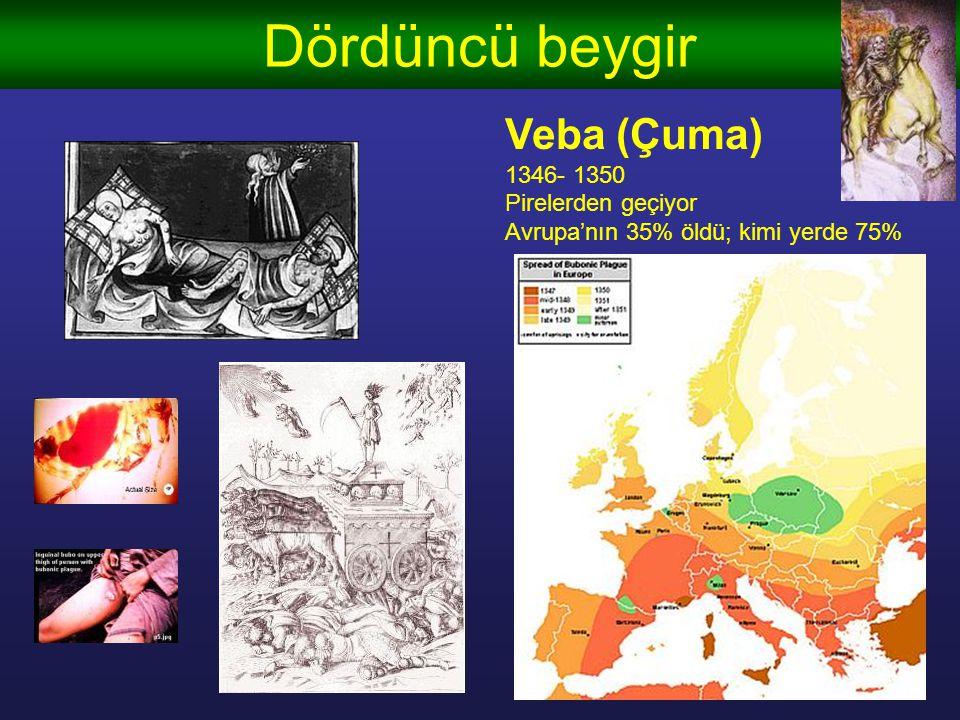 Dördüncü beygir Veba (Çuma) 1346- 1350 Pirelerden geçiyor