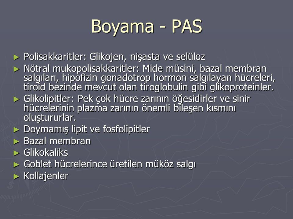 Boyama - PAS Polisakkaritler: Glikojen, nişasta ve selüloz